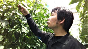 県庁職員から地域おこし協力隊に・新規就農を目指す金井要樹氏の農業観・農地観